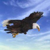 Animal Animated Eagle Attack