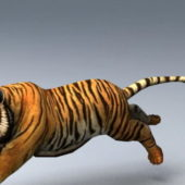 Animated Wild Animal Tiger Rigged