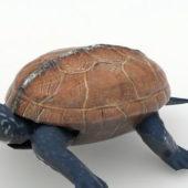 Animated Tortoise Animal