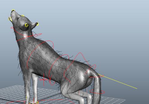 Animated Wolf Animal