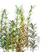 Wild Aquatic Plants