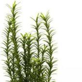 Aquatic Water Plants Tree