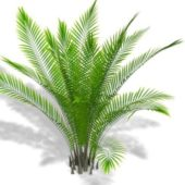 Garden Bamboo Palm Plant