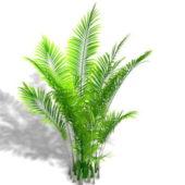Garden Areca Palm Plant