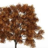 Autumn Ash Fraxinus Tree