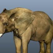 Wild Animal Asian Elephant