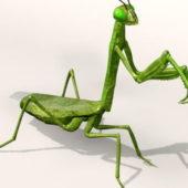 Animal Mantis