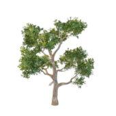 Nature Australia Eucalyptus Tree