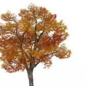 Nature Plant Autumn Platanus Tree