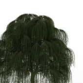 Babylon Weeping Willow Green Tree