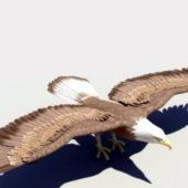 Bald Eagle Animal Rigged