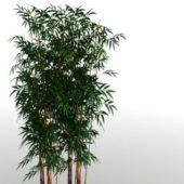 Green Bamboo Grove