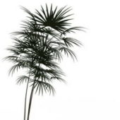 Green Bamboo Palm Tree