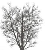 Bare Elm Tree Winter Plant