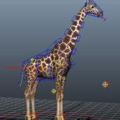 Beautiful Giraffe Rigged