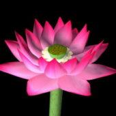 Garden Lotus Flower