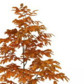 Beautiful Autumn Maple Tree