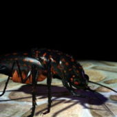 Black Bug Animal