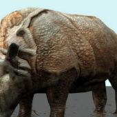 Black Rhinoceros Animal Rigged