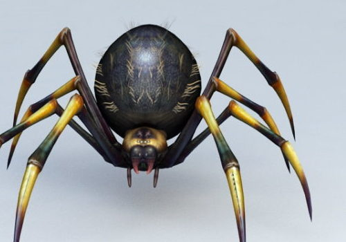 Cartoon Black Yellow Spider