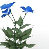Garden Blue Flower Plants