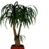 Indoor Bonsai Plant In Pot