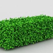 Garden Box Hedge Topiary
