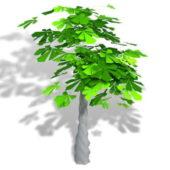 Garden Money Tree