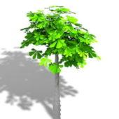 Garden Braided Trunk Plant
