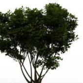 Green Branching Tree