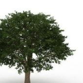 Nature Plant Brazilian Pepper Tree