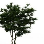 Brigalow Green Tree