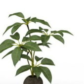 Green Broad Leaf Potted Tree