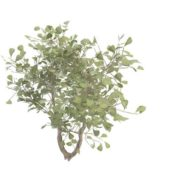 Nature Green Broad-leaved Evergreen Tree