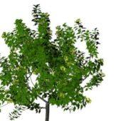 Nature Broad-leaved Tree