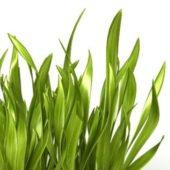 Garden Broadleaf Grass Weeds