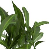 Green Broad-leaf Garden Plants