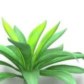 Garden Broadleaf Plant
