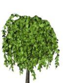 Nature Broadleaf Tree