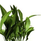 Nature Broadleaf Weeds Plant