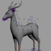 Animal Buck Deer Rigged