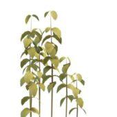Yellow Bush Plant