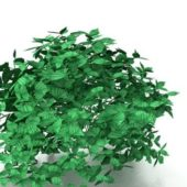 Green Bush Shrubs