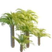 Cabbage Palmetto Nature Palm Trees