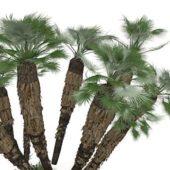 California Green Palm Trees
