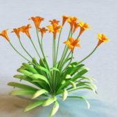 Garden Canna Flowering Plant