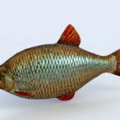 Water Carp Fish