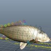 Carp Fish Animal Rigged