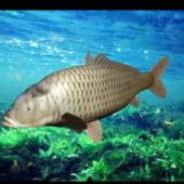 Animal Carp Fish Rigged