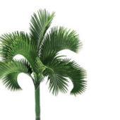 Carpoxylon Macrospermum Palm Tree
